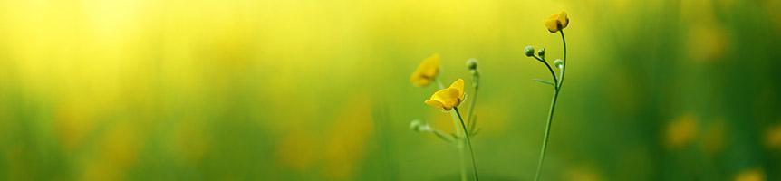 Fleurs de Bach Diffusion Rosicrucienne